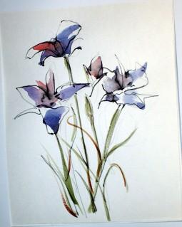 Wildflower 4